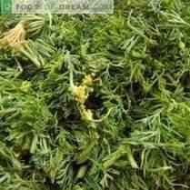 Eu colho verdes durante o inverno