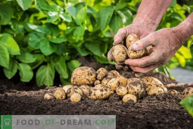 """""""Taboo TRIO"""" - bezpieczne zapobieganie przedsiewnym chorobom ziemniaków i szkodnikom"""