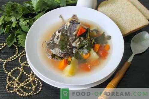 Sopa de peixe-gato - como cozinhá-lo de forma adequada e saborosa (receita com fotos)