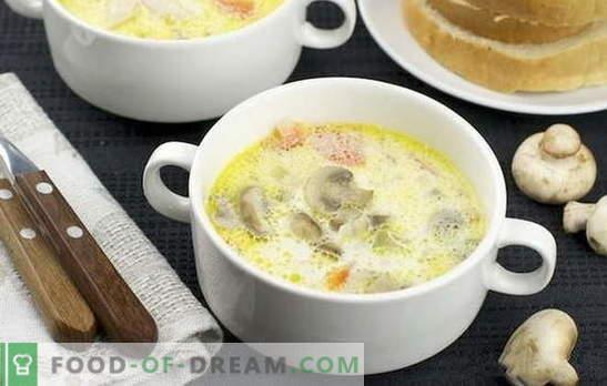 Sopa creme de cogumelos: clássica e original. Receitas leves sopa de creme de cogumelos para negócios e jantar em casa