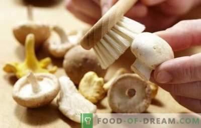 Como limpar champignons: para ferver, fritar, marinar. Os champignons são limpos antes de cozinhar e por quê?