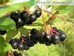 Como secar chokeberry preto