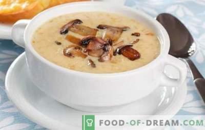 Sopa creme de cogumelos - a loucura dos sabores e aromas! Uma seleção de receitas para uma variedade de sopas de creme de cogumelos para todos os dias